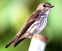 birding in north Philippines